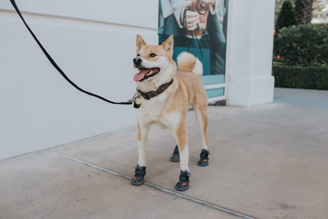 Fresh Pawz Beluga 544 Dog Shoes Nice